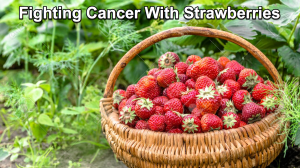 Strawberries were one of my mighty warrior foods when I was detoxing my body to heal from cancer