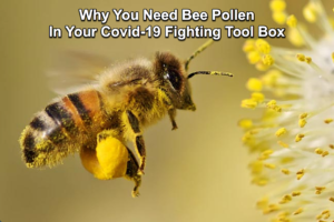 Pure Natural Bee Pollen Enhances The Immune System To Fight Covid-19